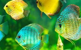 types of aquarium fish tropical fish types names tropical fish types with pictures 2017 fish tank maintenance