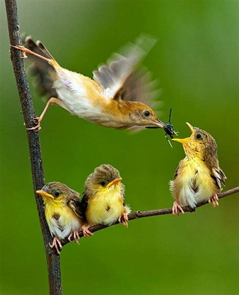 mother bird feeding babies birds of a feather pinterest