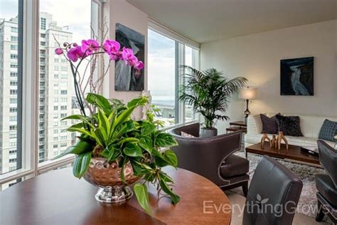 Beautiful Apartment Plants 17 Best Images About Orchids And Flowering Plants On
