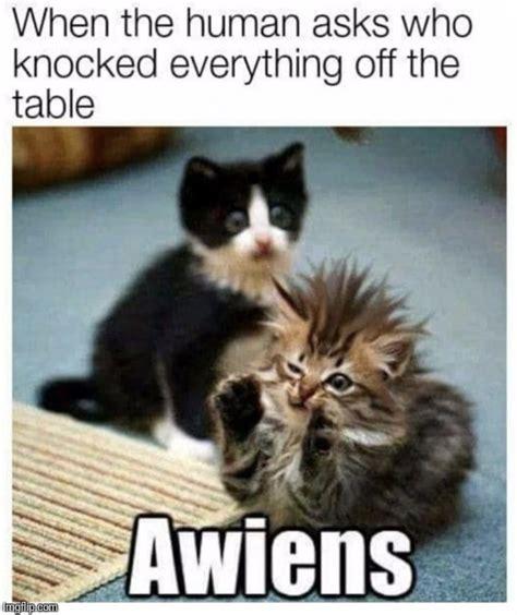 Meme Tchite - awiens imgflip
