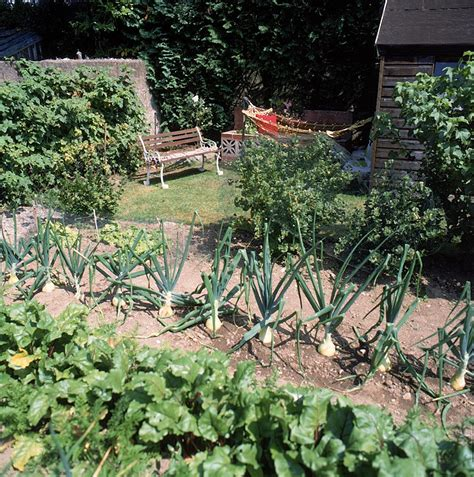 The Garden Kitchen by Plant Types Kitchen Garden