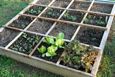 Square Gardens by Better For Planting Square Foot Gardening Vs Row