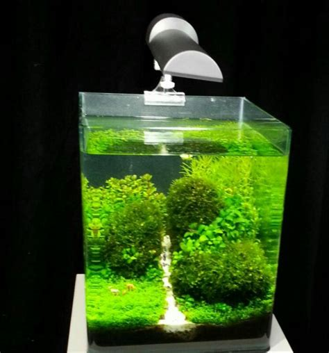 membuat aquascape mini gallery foto aquascape mini ferboes com