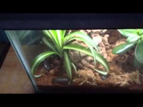 house gecko care baby house gecko doovi