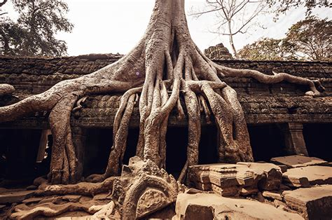 buro tree travel diary the sights and personalities of cambodia