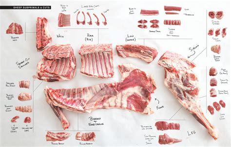 butcher diagram goat cuts diagram goat diagram elsavadorla