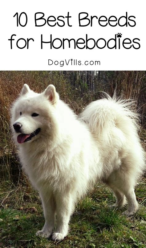 compare breeds 10 best breeds for homebodies dogvills