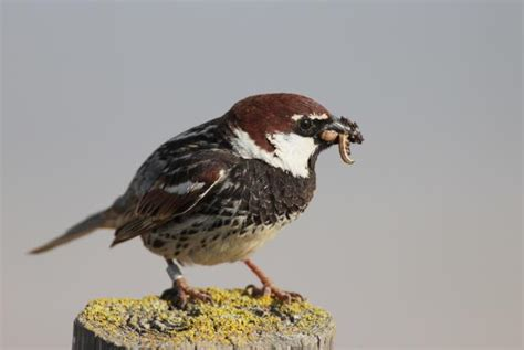 birdlife leave baby sparrows alone