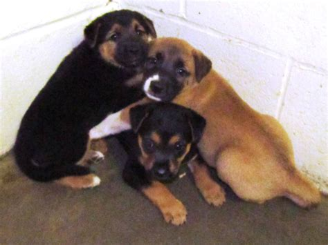 shelters in nc nc shelter rescue inc many carolina animal shelters prefer to quot paw quot their