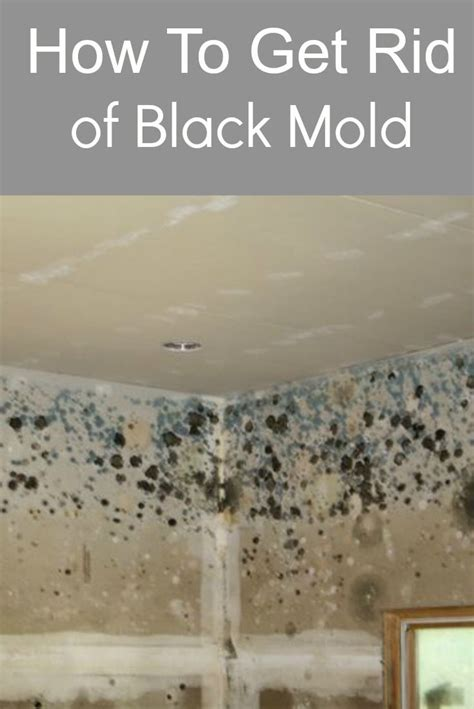 how to get rid of mold on the bathroom ceiling 17 images about reclaimed to fame on pinterest