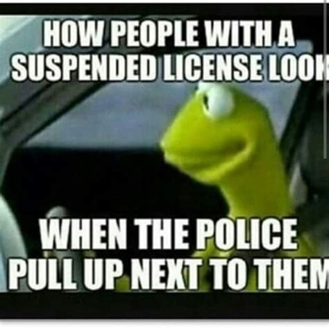 Funny Cop Memes - 283 best kermit meme speaks images on pinterest funny