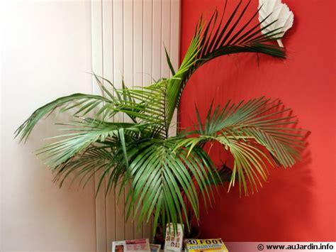 les palmiers d int 233 rieur