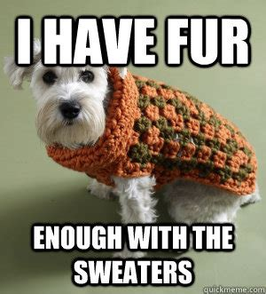 Sweater Meme - sweater dog memes quickmeme