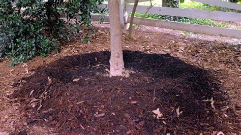 don t let a blanket of mulch leave your garden in tatters