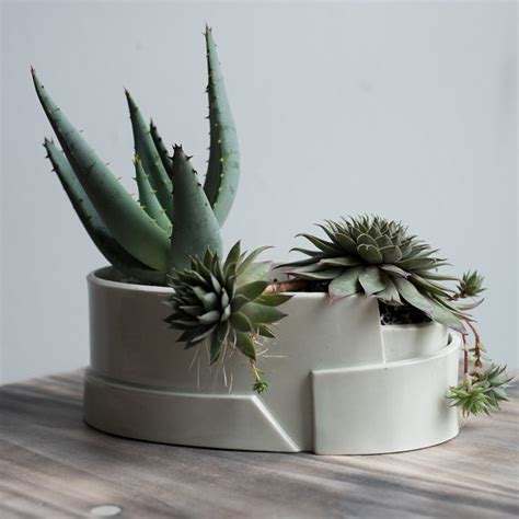unique planters for succulents 18 cute and unique planters for succulents huffpost