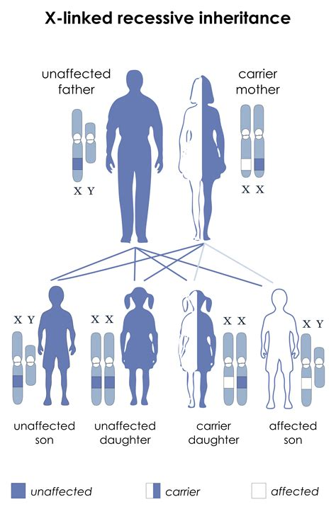 exle of y linked disorder x linked recessive inheritance