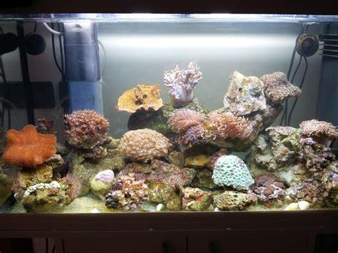 illuminazione acquario marino illuminazione per acquario marino acquari di casa