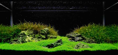 Iwagumi Aquascape by Aquascaping World Magazine Iwagumi Style