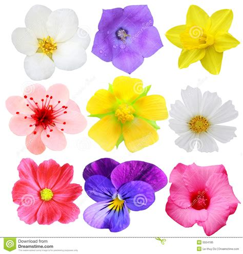 Set Flower set of flowers royalty free stock photo image 5554185