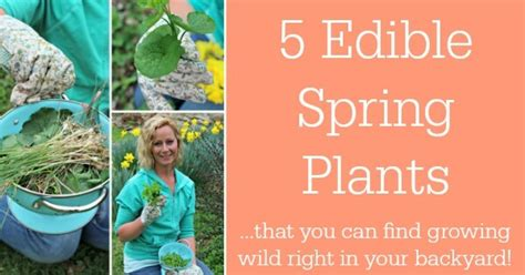 edible plants in your backyard 5 edible spring plants that you can find growing wild