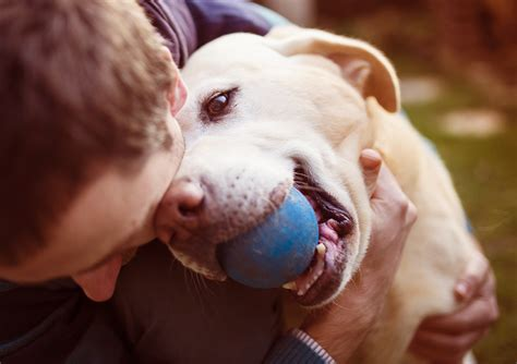 how to deal with puppy separation anxiety how to help your pet deal with separation anxiety fetch pet care