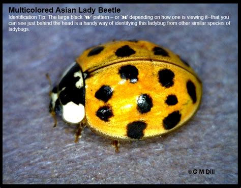 asian beetles and dogs asian pics