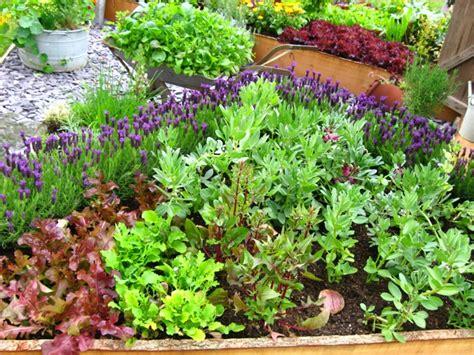 Vegetable Garden Tips Homey Garden Create Your Homey Garden