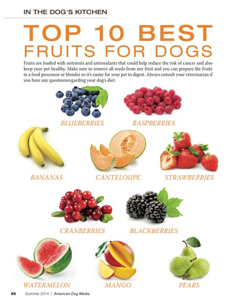 best food for dogs top 10 best vegetables for my