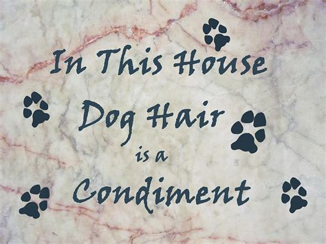 dog hair in house in this house dog hair is a condiment by william fields