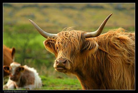 Search Scotland Travel To Scotland Image Search Results