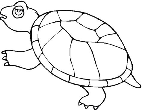 pet turtle coloring page free coloring pages of box turtle