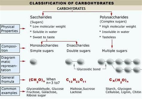 a cellular carbohydrates cellular macromolecules biology4isc