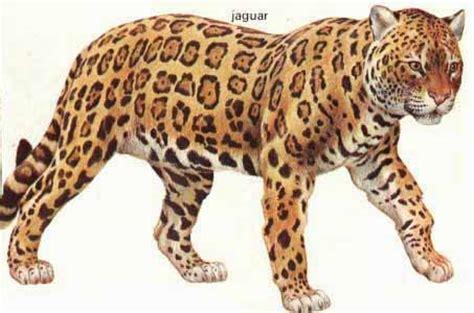 imagenes animadas de un jaguar imagen animada de jaguar imagui