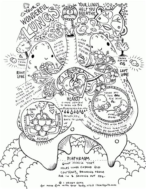 coloring page of heart anatomy anatomy coloring pages heart coloring home