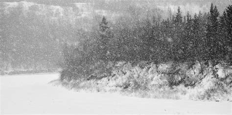 black snow trees and snow in black and white randall talbot artist