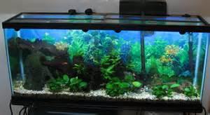 55 gallon freshwater planted fish tank   Neeland Cottage