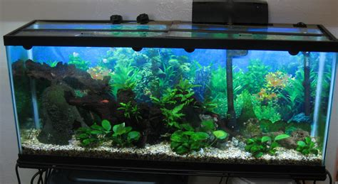 aquarium design ken sielsie 55 gallon aquarium aquaponics plans diy