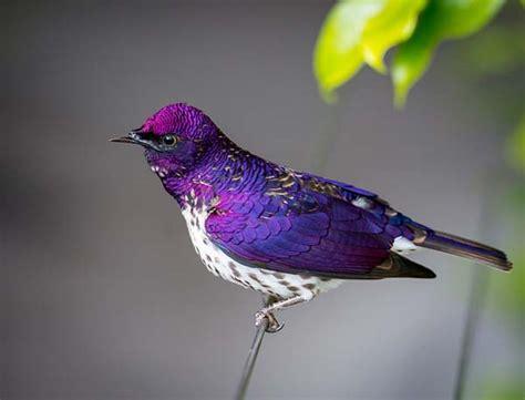 Bird Purple by Animals Purple 15 Beautiful Photos Talk