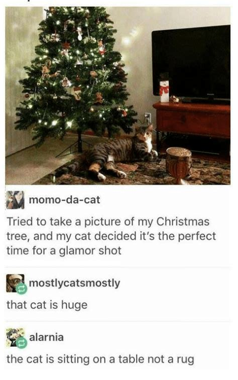 momo da cat tried to take a picture of my christmas tree