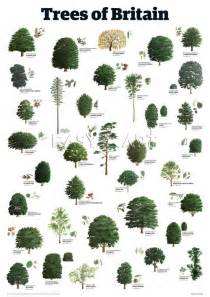 types of trees trees of britain trees leaves pinterest