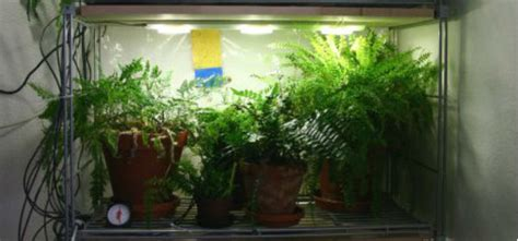 growing plants indoors  artificial light topeka