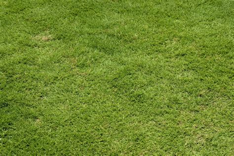 green lawn grass background free stock photo