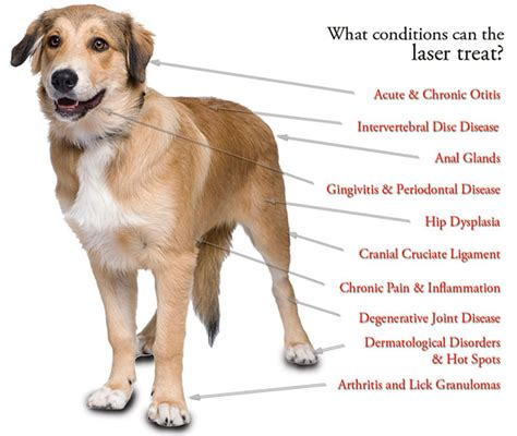 laser therapy for dogs suncook river veterinary clinic veterinarians in epsom nh northwood area