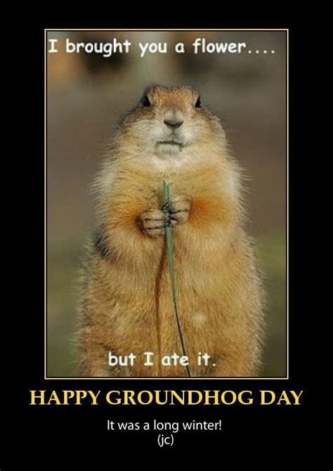 groundhog day morning 17 best groundhog day images on ground hog