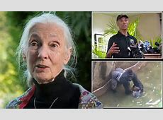 Jane Goodall offers sympathies over death of gorilla ... Jane Goodall Death