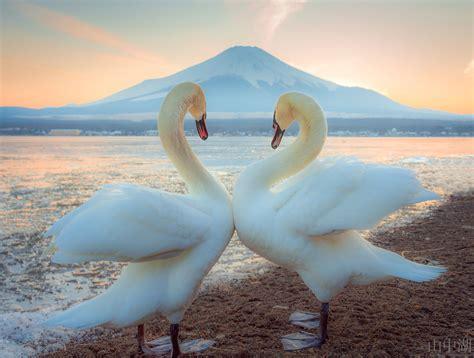 valentines mt happy s day lake yamanaka with mt fuji