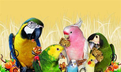 listed find  avian veterinarian lafebervet