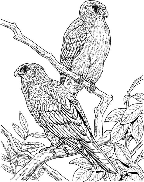 coloring page falcon bird falcon bird coloring pages coloring pages