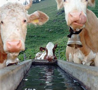 alimento salubre agua saludable cultura agua