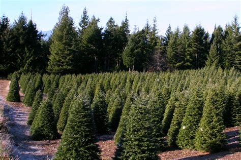 hubert s christmas tree farm in kitsap county military